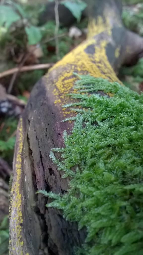 souche d'arbre et champignons